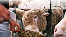 大关岭羊群牧场