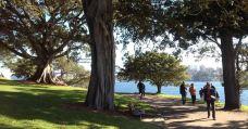 皇家植物园-悉尼-m82****25