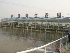 芦荡河生态园-镇江-尊敬的会员