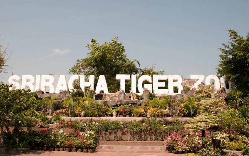 Sriracha Tiger Zoo Entry Ticket in Pattaya