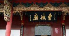 曹娥庙-上虞区-盲龟_浮木