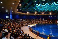 南京海底世界-南京-山野幽居
