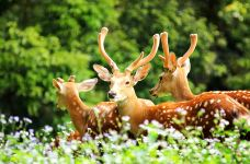 长隆野生动物世界-广州-用户10000