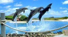 夏威夷海洋公园-夏威夷-兔爺
