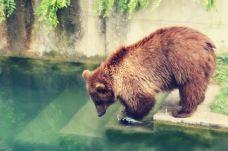 伯尔尼熊公园-伯尔尼-soisabel