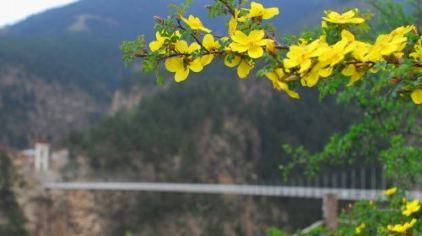 贺兰山苏峪口国家森林公园13