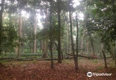 Reserve Naturelle du Banco-阿比让